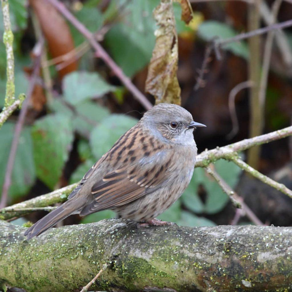 Een vogel gezien tijdens het vogelspotten