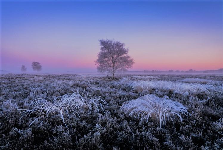 Een winter foto in de vroege ochtend van de natuur met dauw.